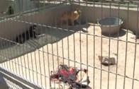 Al Fresco: reportaje Arca de Noe 2 junio 2013