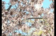 Aumenta el polen esta primavera