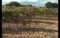 Las inundaciones afectan a unas 1000 hectáreas agrícolas en la provincia