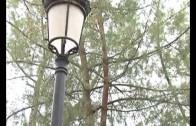 Nueva ordenanza para proteger los árboles de la capital