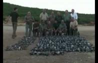 perdigones de plomo en la caza de aves