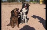 Perros albaceteños famosos en televisión