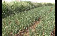 Polémica en el sector agrícola por el último Real Decreto sobre el Júcar