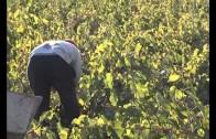 La Union de Pequeños Agricultores reclama compromisos al Gobierno regional