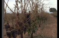 El pedrisco deja daños irreparables en la provincia