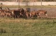 Al Fresco reportaje » Granja de Ciervos»