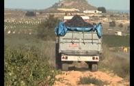 Unos 200 albaceteños trabajarán en la vendimia francesa