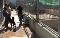 Adoptar una mascota, la mejor opción para adquirir un animal
