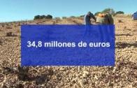 Albacete recibe más del 25% de las ayudas del viñedo