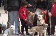 APDC feria adopción perros 28 octubre 2015