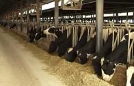 Jornada informativa para jóvenes agricultores y ganaderos