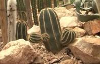 Visitas guiadas a los ecosistemas de la región en el jardín botánico