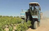 Amplían hasta el 25 de agosto el plazo de ayudas a jóvenes agricultores