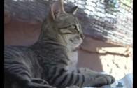 Dejando huella, preocupada por los gatos callejeros