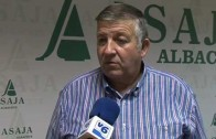 La plaga de conejos invade la provincia de Albacete
