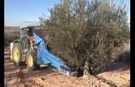 Preocupación ante la merma en la producción de aceite