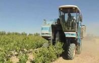 UPA pide prudencia ante nuevas plantaciones de viñedo