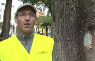 Un paseo por los olmos de Albacete