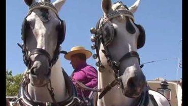 Feria Ecuestre 120917