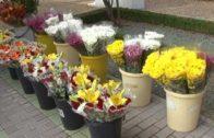 Gastamos una media de 50€ en flores