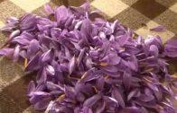 Un anticipo del Festival de la Rosa del Azafrán en Albacete