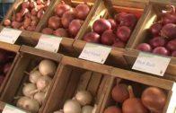 Encuentro Internacional del sector de la cebolla en Albacete