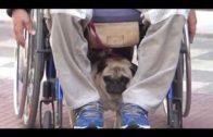Una ley para proteger a las personas con discapacidad