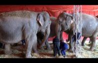 Las elefantas se recuperarán en Pozo Cañada