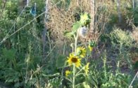 Al Fresco Reportaje Huertos La Dehesa Ecológicos 10 de Agosto 2018