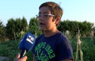Los huertos ecológicos son para el verano