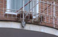 Decenas de aves muertas en un balcón de la capital