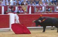 Toros Si 080919