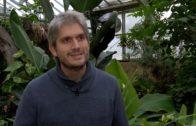 Nuevas especies de insectos  polinizadores en el Jardín Botánico