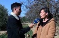Agromundo reportaje II Jornadas de puertas abiertas de cebolla de almacenaje Bejo Spain 2019 en Ferroice