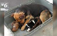 En activo el albergue canino de Diputación