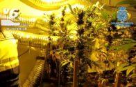 Desmantelan una plantación de cannabis en una nave industrial de Albacete