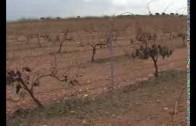 Importantes daños en en los cultivos de Motilleja y Mahora