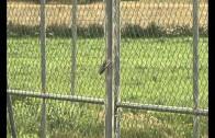 Once detenidos por robar en explotaciones agrícolas