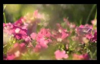 Video didáctico Jardín Botánico
