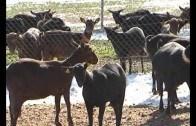 En marcha nuevos cursos formativos sobre la nueva Política Agraria Común