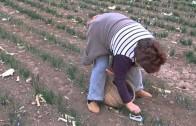 Castilla-La Mancha, por la calidad del azafrán