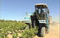 Balance de la campaña vitivinícola