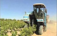 Los agricultores reciben hoy más ayudas de la PAC