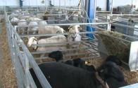 Los campos de Albacete sufren la peor sequía