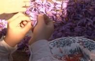 """A Pie de Calle reportaje """"Festival de la Rosa de Azafrán en Chinchilla 2016"""""""