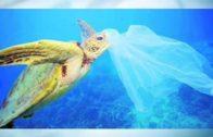 Las bolsas de plástico en establecimientos, prohibidas en 2020