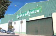 Reportaje Agromundo Cooperativa Del Campo Santa Mónica
