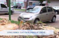 Otro arbol cae en El Parque Lineal 110919