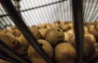La lotería, un ingrediente fundamental de la Navidad