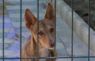 Las protectoras de Albacete  reclaman una ordenanza de protección y bienestar animal